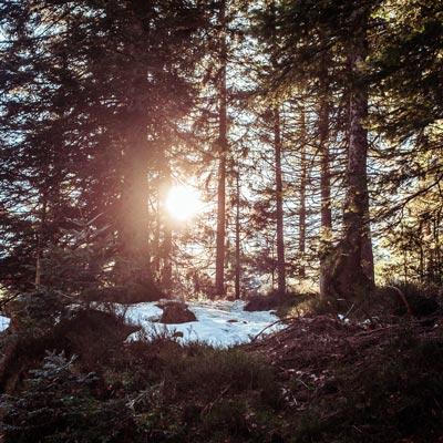 Mariage en hiver, lac des corbeaux, soleil dans la foret