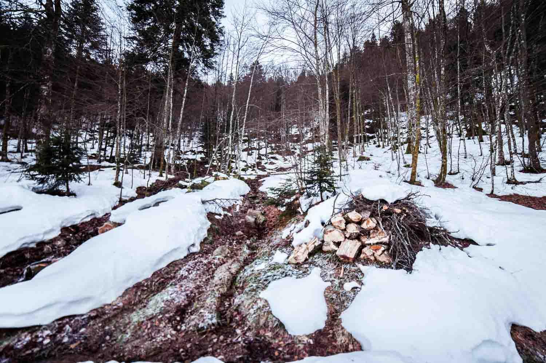 Forêt, Lac des Corbeaux