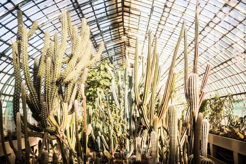 Cactus au jardin des Serres d'Auteuil